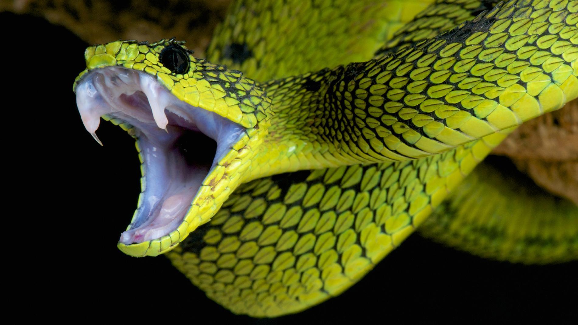 snake - 1024×575
